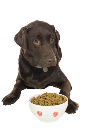 Best Dog Food For Labs >> Dog Food Recipes Ingrediants To Use And Those To Avoid