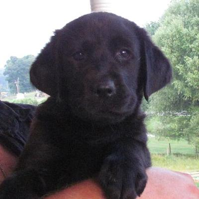 One of the lovely boys available