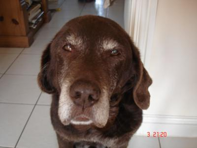 Charlie Dog (14 years)