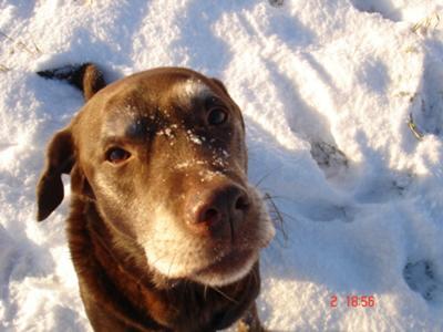 Woody Dog (11 years)