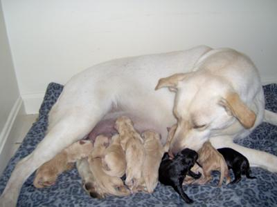 Her new babies