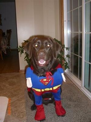 GUS -- SUPER DOG