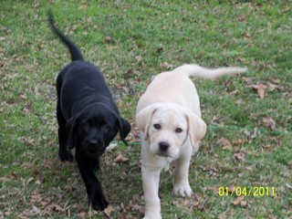 Mufasa with his sister negra at 2 months