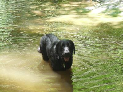 remington in a stream at table rock
