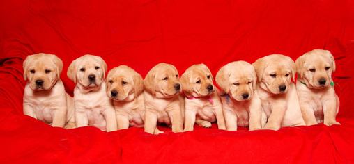 how to tell if your newborn puppy is blind