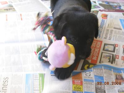 Bonnie loves toys (this one was desroyed)