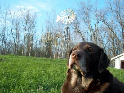 Brady enjoying the summer sun