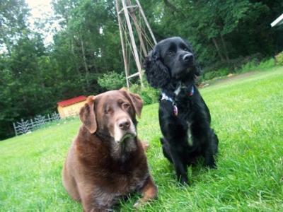 Brady and Milly