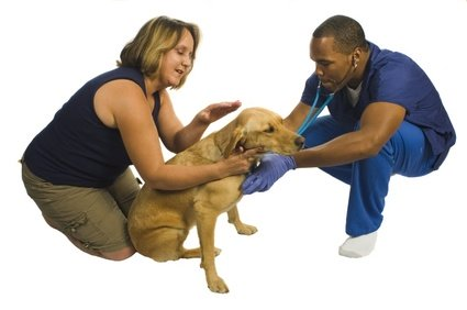 the myths surrounding spaying and neutering Texas coalition of animal protection (tcap) and spay neuter network offer low  cost sterilization  there are a number of myths about spaying and neutering.