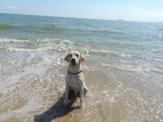 Mufasa at the beach