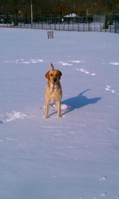 Sonny  in snow