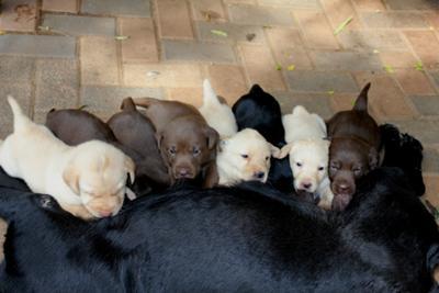 Zena and babies